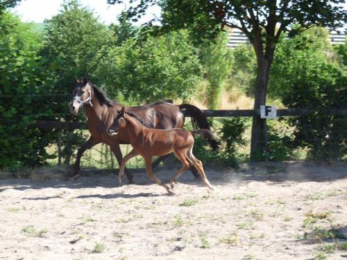 03 pferdezucht 010