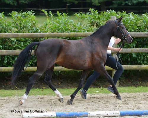 03 pferdezucht 012