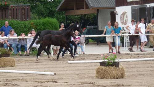 03 pferdezucht 017