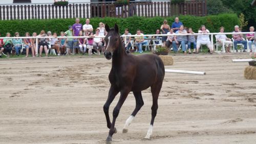 03 pferdezucht 018