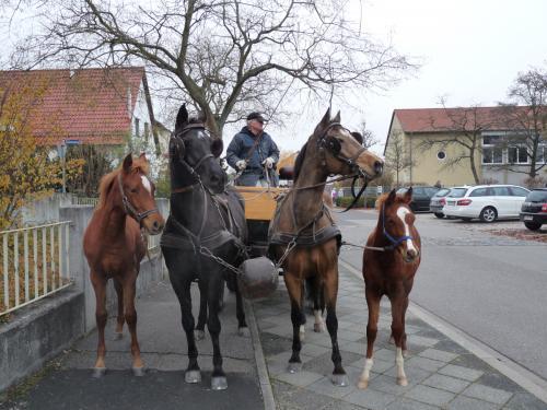 03 pferdezucht 021