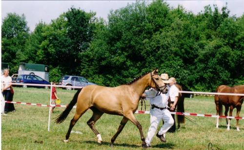 03 pferdezucht 022