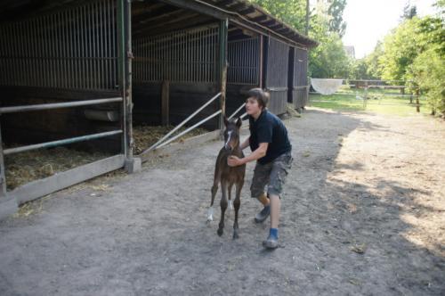 28 pferdehaltung 001