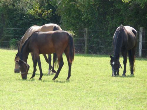 28 pferdehaltung 005