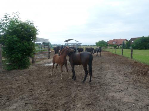 28 pferdehaltung 006