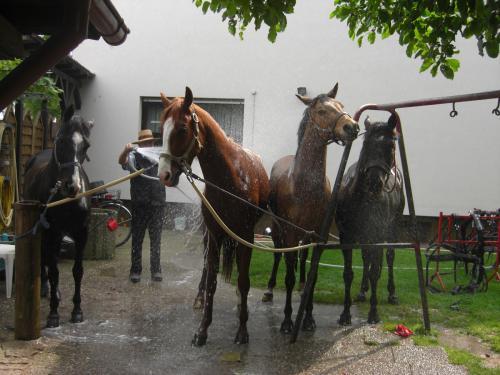 28 pferdehaltung 008
