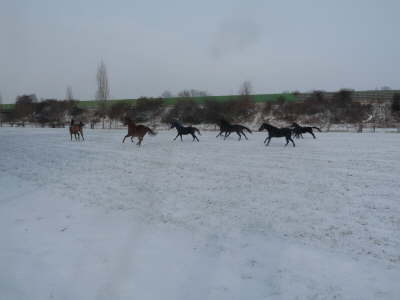 db Pferde 1031